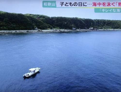 串本の水中鯉のぼりがニュースで取り上げられました